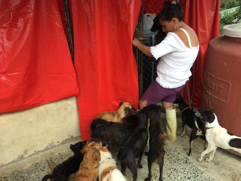 Milagros trabajando en el refugio / Foto: Darío Alejandro Alemán