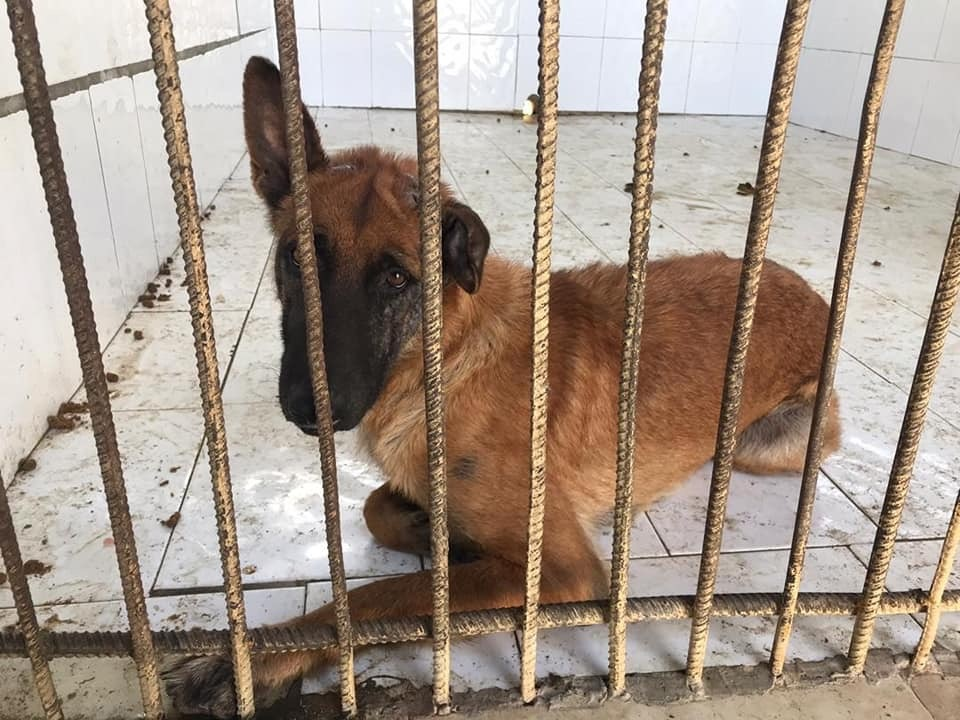Perro encerrado en Zoonosis / Foto: Cortesía de Beatriz Batista
