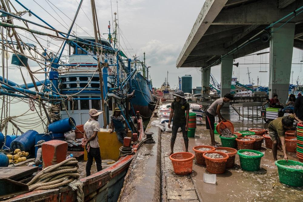 Hombres descargan pescado de barcos transportados en Kantang